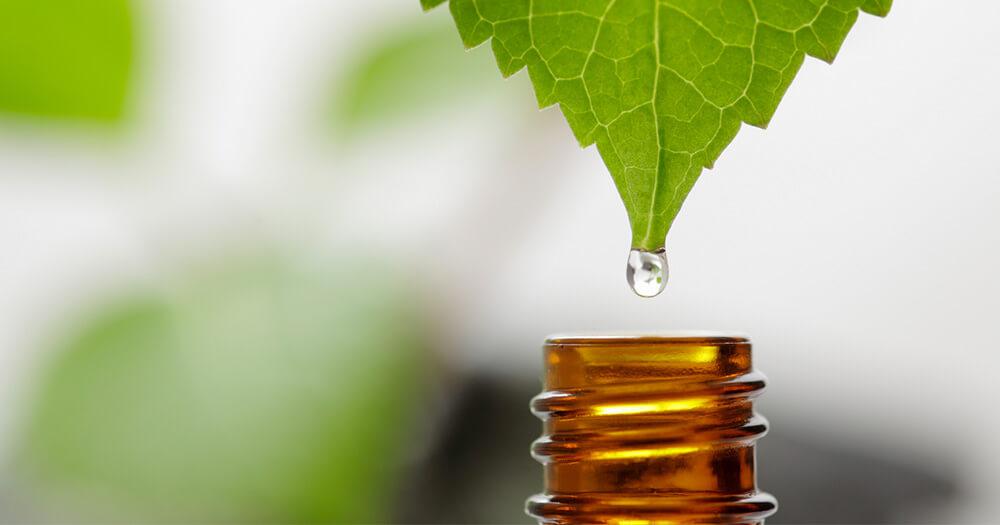 Naturopathy essay writing companies